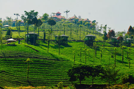 Escape Yourself Into The Greenery Of Nilgiris - Wild Planet Jungle Resort !!!