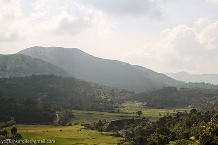 Kudremukh National Park - Shola Forest