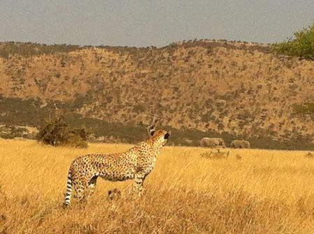 A Wildlife Safari & Luxury Accommodation: Tanzania