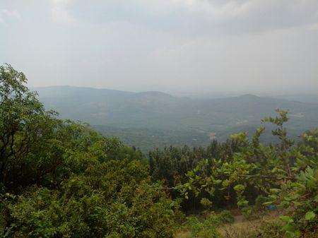 Encounter with elephants in Bilikal Rangaswami hills