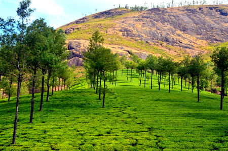 A Trip To God's Own Country - MUNNAR [Part-I]