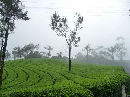 Monsoon in Munnar