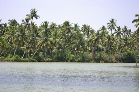Poovar Backwaters – The floral ride and the foodie inside
