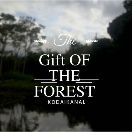 The Gift of the Forest: Kodaikanal