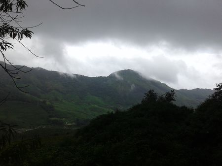 Being Wild with Nilgiri Tahr: Eravikulam National Park