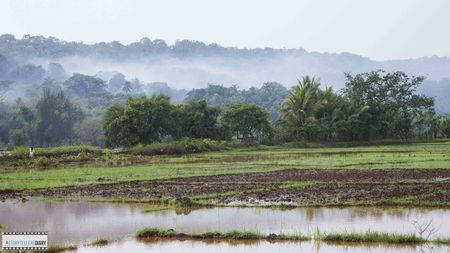 The Konkan Diary - A Photologue