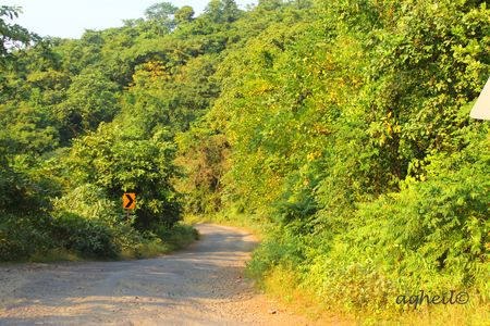 Forest Drive to Konkan