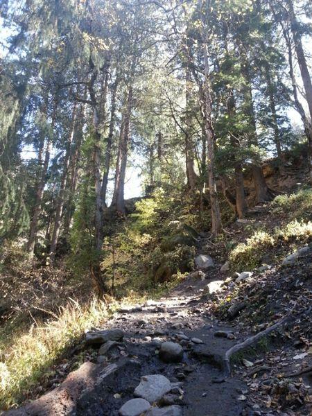 A slice of heaven: Kasol and Kheerganga trek