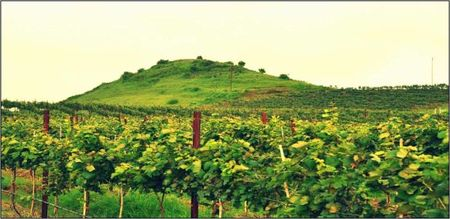 Into the Best Wine Tours of India:Let's Swirl, Sniff and Sip!