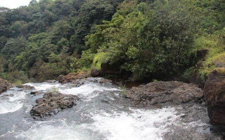 A trip to the valley of flowers-Satara-Maharashtra