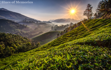 Munnar & Kumarakom - Timeless Beauty – Better than Words
