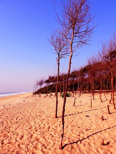 Chandrabhaga a Virgin Tale : A beach in Eastern Orissa