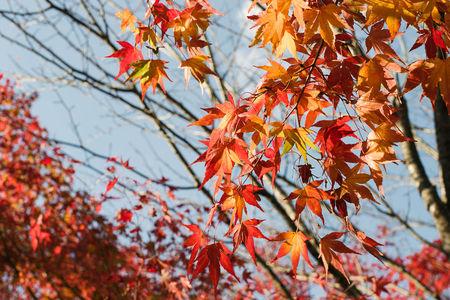 Autumn 2014: Lake Miyagase