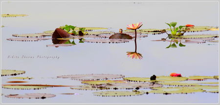 Creative beauty by God - Kerela