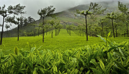 10 exotic Homestays in Coorg for all Nature Lovers!