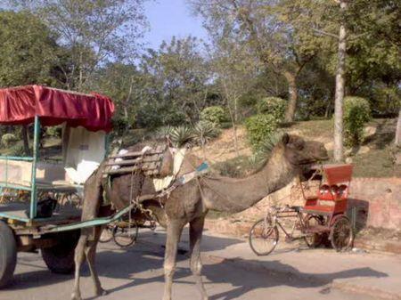 City Breaks: To Taj Mahal and Agra Fort