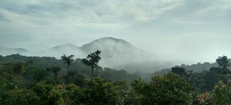 Bisle Ghat -Treat yourself with green rush of this forest reserve!
