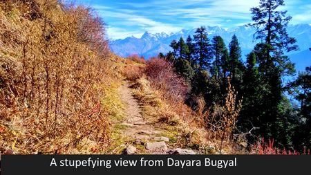 Dayara Bugyal Trek – Journey to the Nature's Own Gardens !
