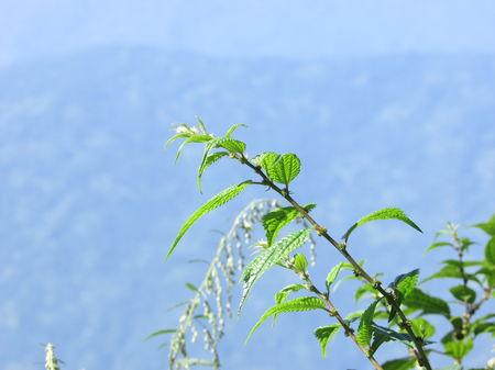 Darjeeling : The unplanned , the best one..