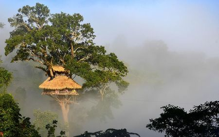 Stay In The World's Highest Tree House Where Zip Lining Is The Only Way In And Live The Jungle Life