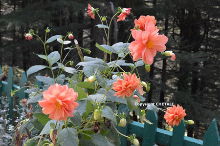 Dalhousie-Khajjiar-Chamba-Himanchal Pradesh
