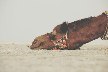 Kutch: Where Culture Awaits