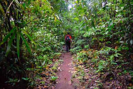 Trekking in Goa – Exploring the Home of Mighty King Cobra