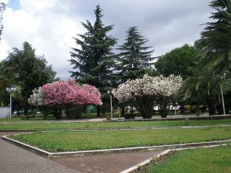 Tirana, a surprise