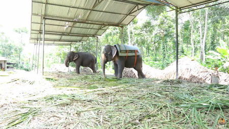 Bucket List Experience: Trekking Through The Spice Plantations Of Kerala's Kumily