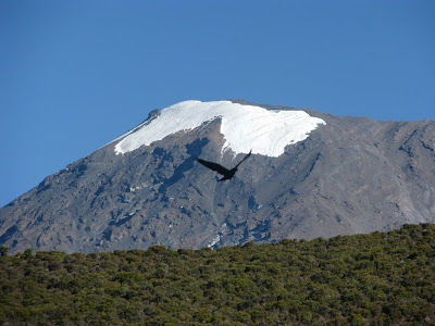 Trek up the Kilimanjaro