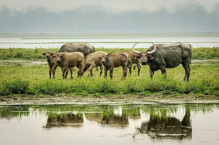 Chase The Wild Through Five Of India's Most Spectacular National Parks