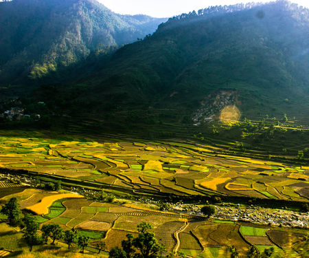 Farmlands of Himalayas