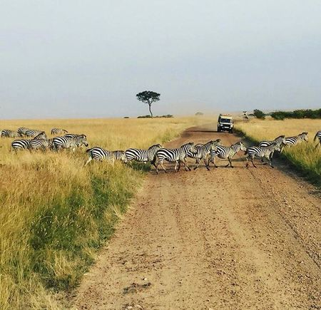 Wildlife Safari In Africa- A Must Have Experience!