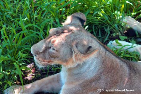 My trip to Chhatbir Zoo - adjacent to Chandigarh - Haryana - India