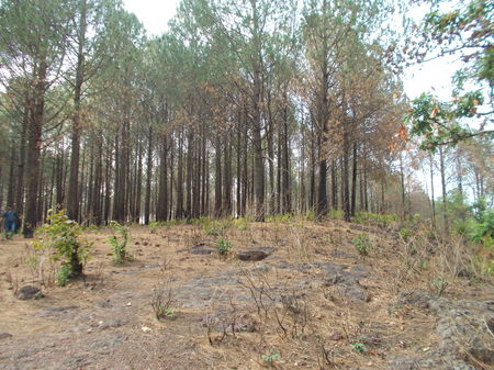 Weak end Outing to the Queen of Chotanagpur plateau: Netarhat