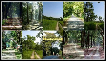 Dudhwa National Park: A Wild Heaven