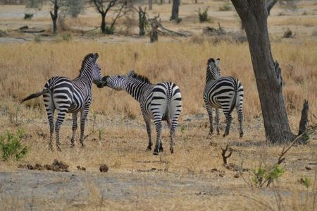 3days / 2 nights trip Tanzania