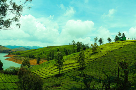 Ooty: Lush greenery with bountiful adventures