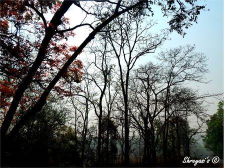 An unexplored nature's wonder
