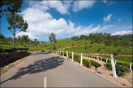 An Unplanned Road Trip to Kerala