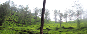 Thekkady Travel Trails