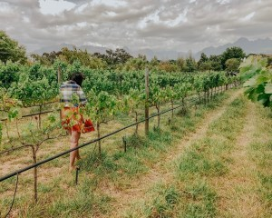 Wine Tasting in South Africa : An enchanting day in Stellenbosch - The Travelling Lipstick