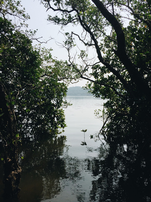 Day Trip to Chorão Island-Goa. Visited Dr. Salim Ali Bird Sanctuary and found an inhabitant mystery