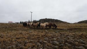 Iceland: Snæfellsnes Peninsula