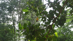 Wayanad - Wildlife Sanctuary - Day 2 - P3