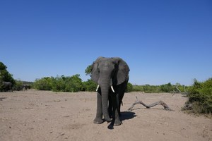 Zambia & Botswana memorable game drives - Welcome Travelers