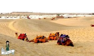 Why you must do a Camel Safari in Jaisalmer