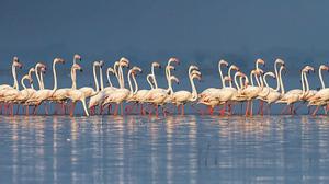 Maharashtra's top winter getaway-Bhigwan Bird Carnival!