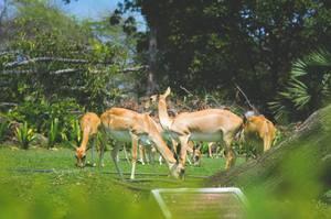 Pondicherry- A Photo Dairy