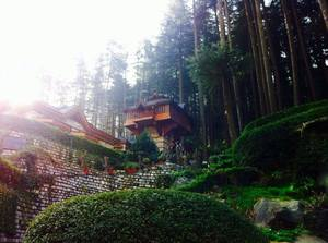 My Favourite day in 'Kasol' - Up in the Himachal